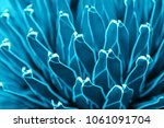 agave cactus  abstract natural... | Shutterstock . vector #1061091704