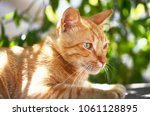 portrait of beautiful ginger... | Shutterstock . vector #1061128895
