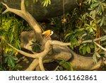 toucan with open beak on a... | Shutterstock . vector #1061162861