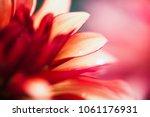 macro shot of a pink flower  ... | Shutterstock . vector #1061176931