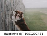 dog put paws on fence | Shutterstock . vector #1061202431