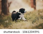 little puppy on green grass in... | Shutterstock . vector #1061204591