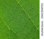 green leaf texture | Shutterstock . vector #1061206931