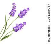 lavender flowers in closeup.... | Shutterstock .eps vector #1061259767