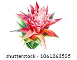 flowers guzmania watercolor... | Shutterstock . vector #1061263535