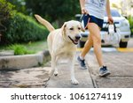 Stock photo yellow labrador retriever walking besides owner outdoor on pavement 1061274119