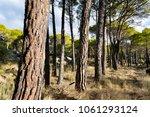 concejo pinewood in cadalso de... | Shutterstock . vector #1061293124