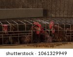 production of eggs with hens... | Shutterstock . vector #1061329949