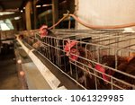 production of eggs with hens... | Shutterstock . vector #1061329985