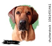 broholmer dog breed isolated on ...   Shutterstock . vector #1061451461