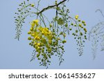 close up small yellow flower or ... | Shutterstock . vector #1061453627