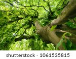 worms eye view of a beautiful... | Shutterstock . vector #1061535815