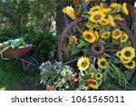 Sunflowers And Wagon Wheel ...