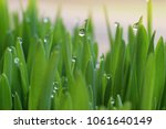 droplets of morning dew in the...   Shutterstock . vector #1061640149