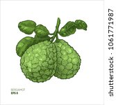 bergamot colored illustration.... | Shutterstock .eps vector #1061771987