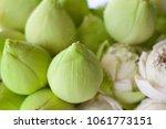 lotus flower is a flower that... | Shutterstock . vector #1061773151