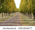 Country Lane With Long Row Of...