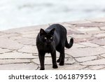 Stock photo a black cat walking on a pier on trasimeno lake umbria 1061879591