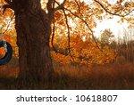 Oak Tree With Swing