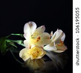 Alstroemeria Lilly Flowers In...