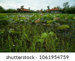 pond and huts in vietnamese... | Shutterstock . vector #1061954759