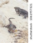 Small photo of Large scaly Iguana close-up against a background of sand