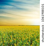 field with sunflowers under... | Shutterstock . vector #1061988101