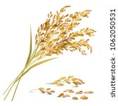 rice ears and grain with... | Shutterstock .eps vector #1062050531