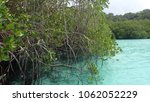 Small photo of Mangrove aea found at crystal clear island located in Tulai island, Malaysia