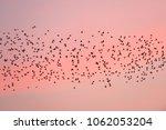 bird migration at sunset.... | Shutterstock . vector #1062053204