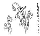 pencil drawing   flower   Shutterstock .eps vector #1062074975