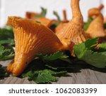 raw wild chanterelle mushrooms...   Shutterstock . vector #1062083399