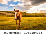 Stock photo chestnut horse on spring field landscape horse at evening horse farm 1062184385