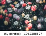 colorful tulip fields in the... | Shutterstock . vector #1062288527