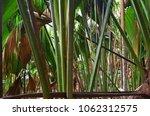 a tropical green rainforest on... | Shutterstock . vector #1062312575