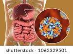 liver with hepatitis b...   Shutterstock . vector #1062329501