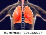 human respiratory system  lungs ...   Shutterstock . vector #1062330377