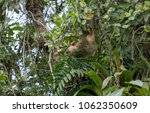 sloth hanging from a tree with...   Shutterstock . vector #1062350609
