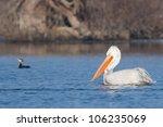 dalmatian pelicans on water in... | Shutterstock . vector #106235069