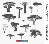 african tree isolated... | Shutterstock .eps vector #1062397991