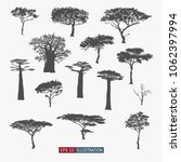 african tree isolated... | Shutterstock .eps vector #1062397994