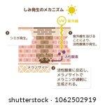 mechanism of skin pigmentation  ... | Shutterstock .eps vector #1062502919