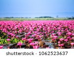 Red Lotus Sea Nong Han Lake ...