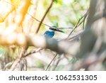 bird  collared kingfisher ... | Shutterstock . vector #1062531305