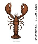 lobster hand drawing vintage... | Shutterstock .eps vector #1062535301
