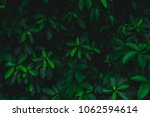 dark botanical background ... | Shutterstock . vector #1062594614
