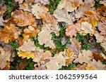 wet fallen oak leaves with... | Shutterstock . vector #1062599564
