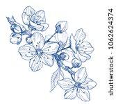 almond blossom branch isolated... | Shutterstock .eps vector #1062624374