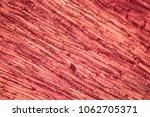 plant cells  from flower petal  ... | Shutterstock . vector #1062705371