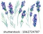 set watercolor lavender flowers ... | Shutterstock . vector #1062724787